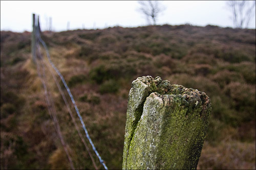 The fence on the edge of the moor.