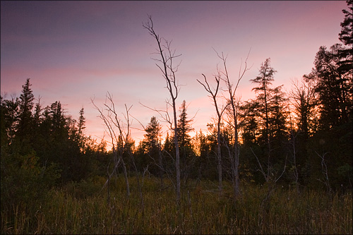 A fading sunset over the roadside swamp.