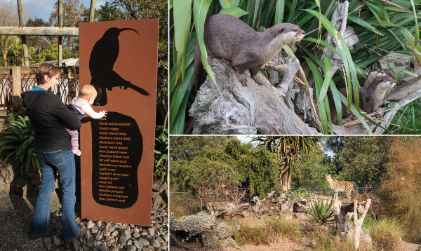 Some of the Auckland Zoo sights: Alayna and one of her namesakes; otters looking for a feed; a serval poses in the afternoon sun.
