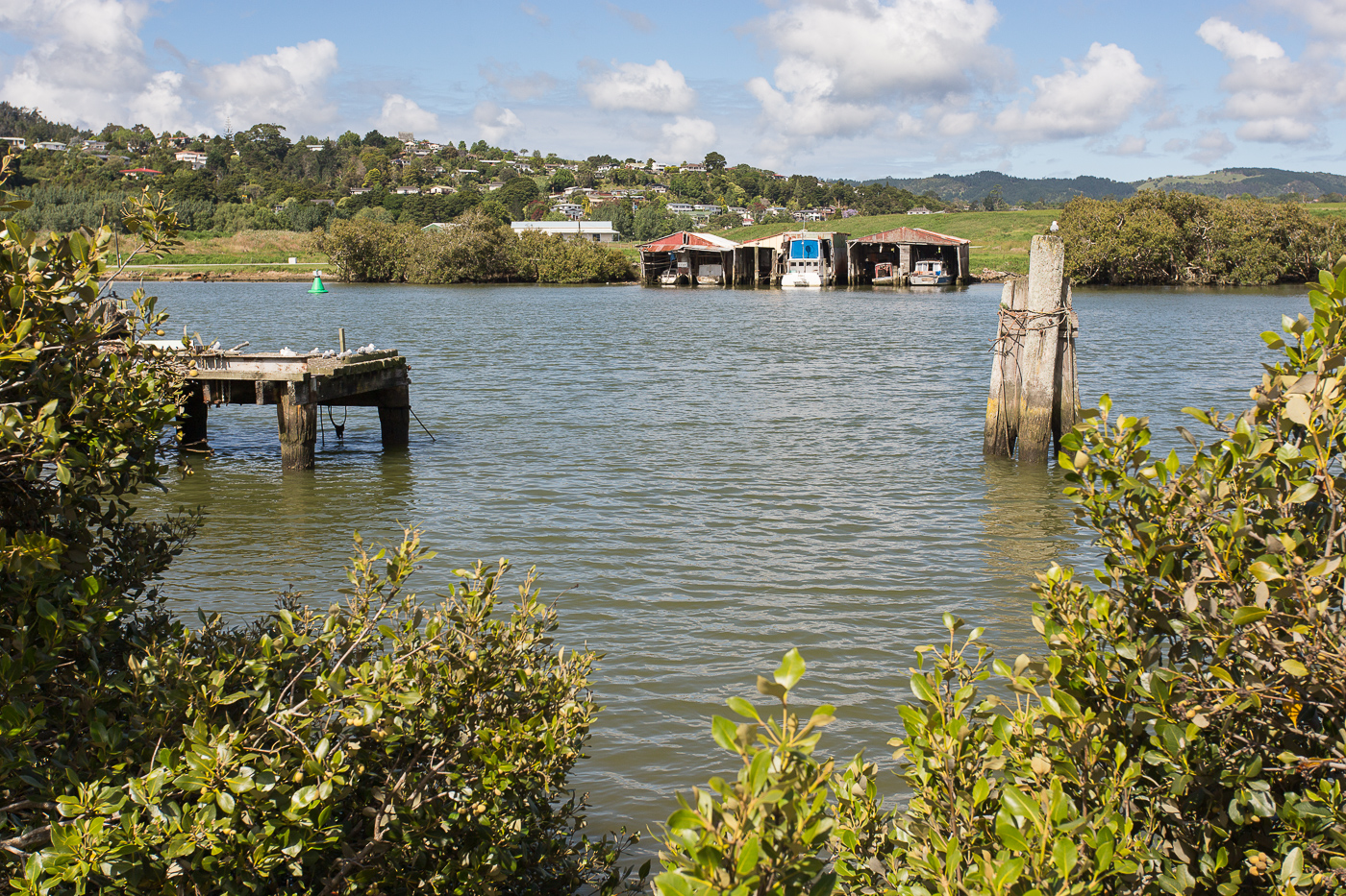 Mangroves and boatsheds