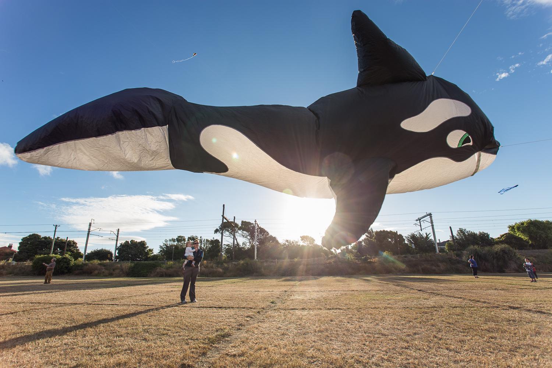 Killer whale encounter