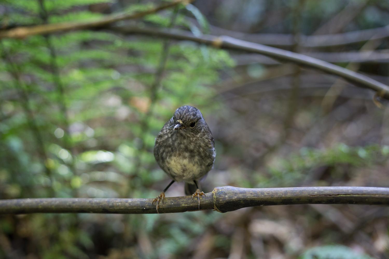 Curious robin