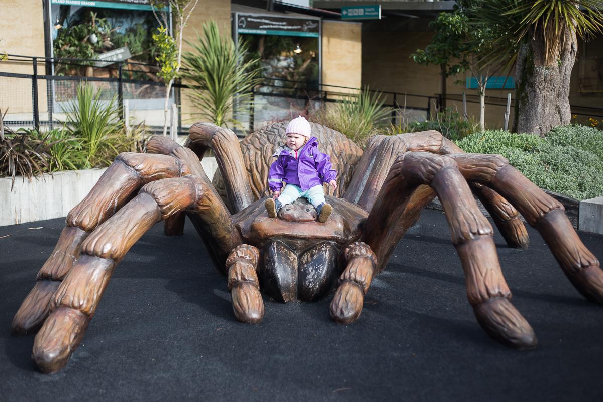 Alayna's pet tarantula