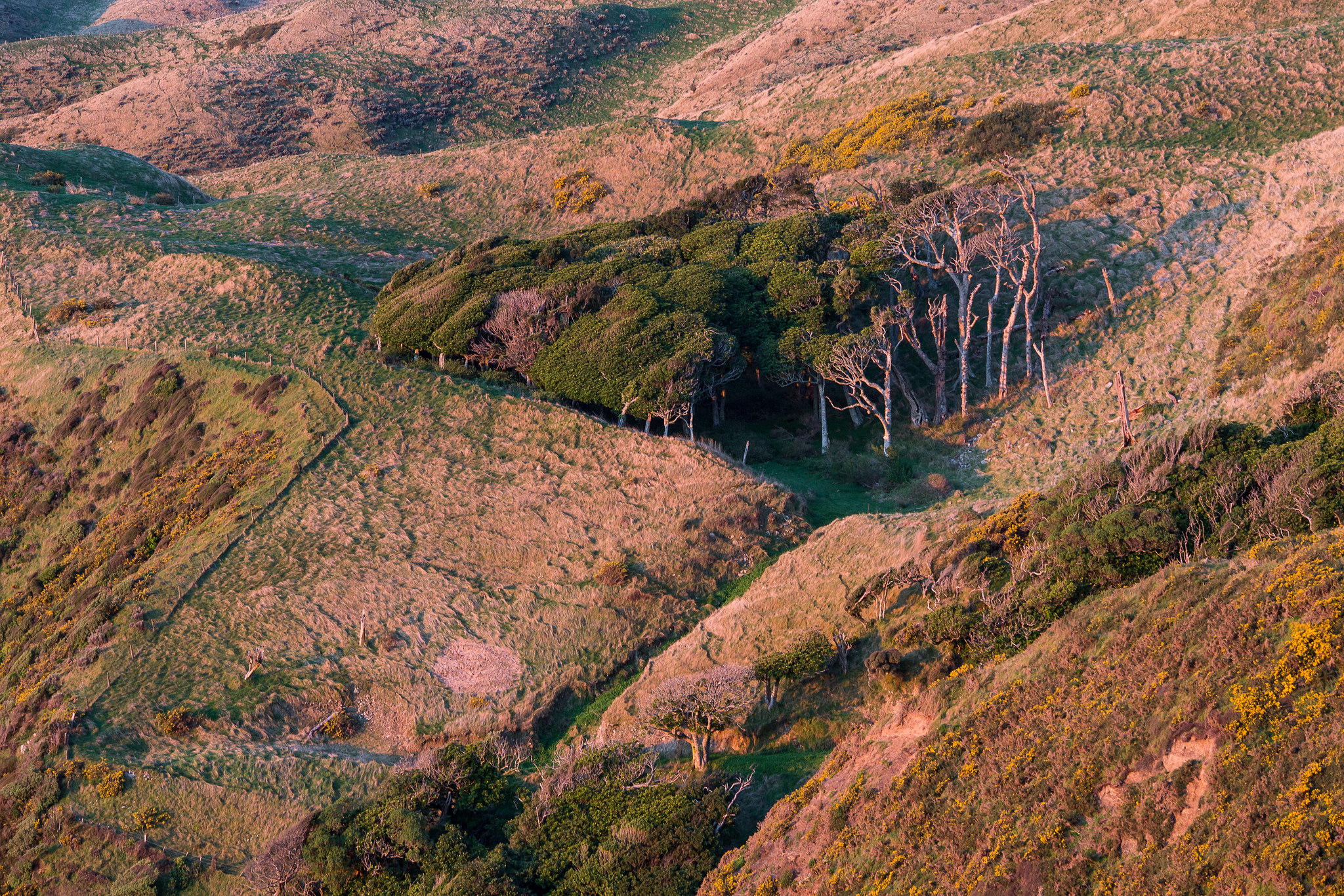 Lovely light on the hills above the Paekakariki Hill Road