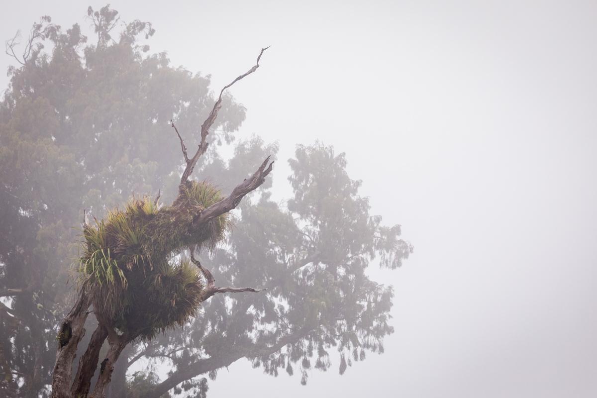 Mist and trees