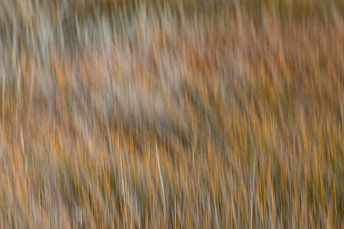 Reeds in motion - Highly commended in the Artistic category