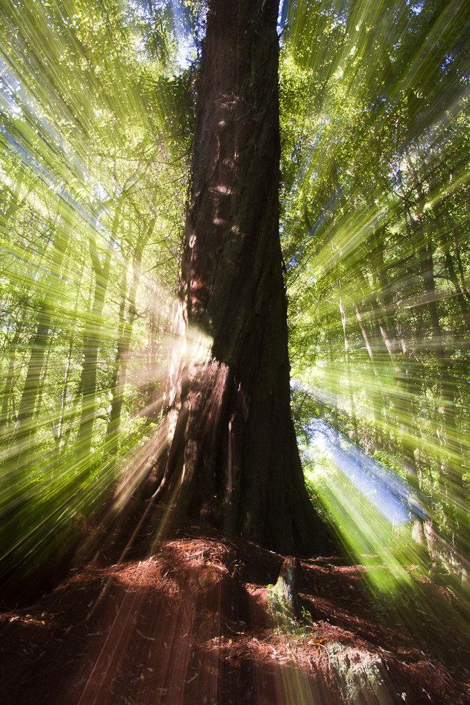 Kaitoke forest zoom