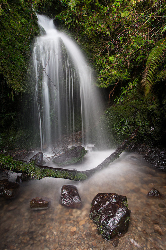 Small waterfall on Tane's Track