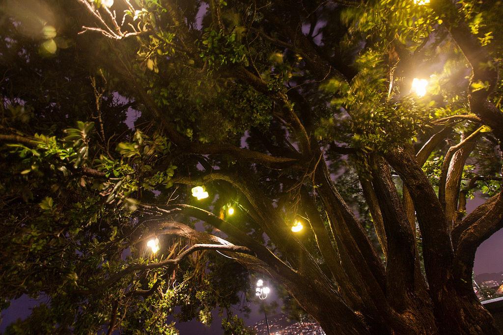 Wellington Lux Festival 2013 - 2472