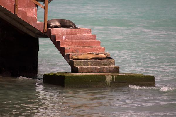 Sea lions relaxing in Puerto Ayora.
