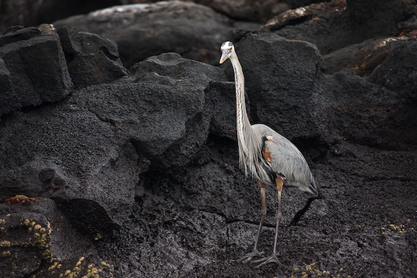 A heron checks us out.