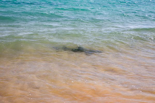A shadowy shark patrols the beach