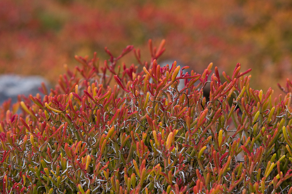 Colourful island vegetation