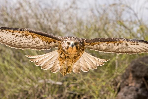 Flying for the lens