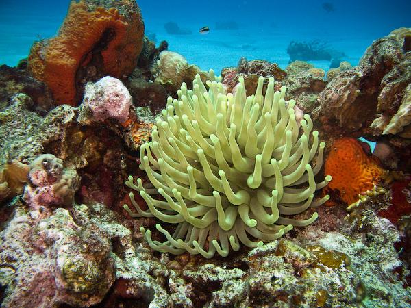 Colour underwater.