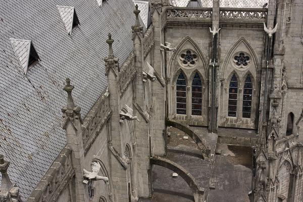 The Basilica gargoyles are Ecuadorian animals