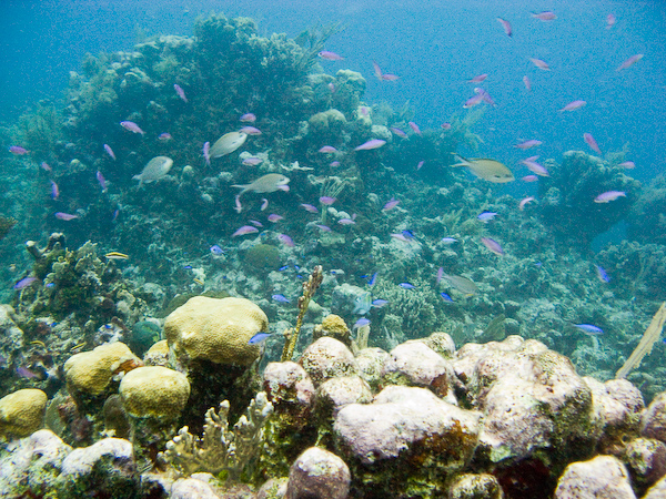 Fish and coral off Utila.