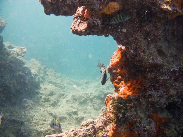 Colour underwater