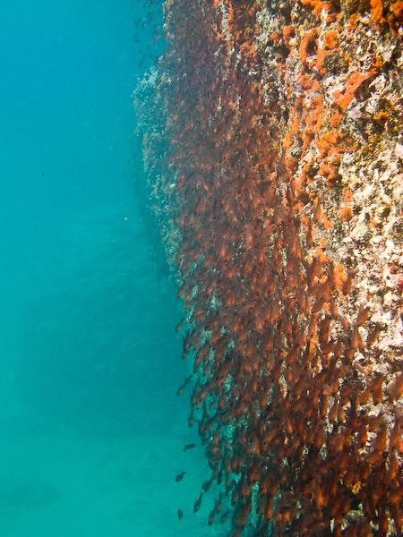 Fish hugging the rock walls