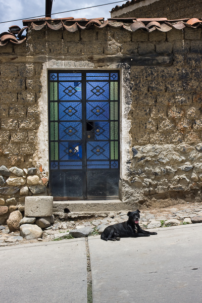 A dog panting on the road in front of a sapphire blue glass door