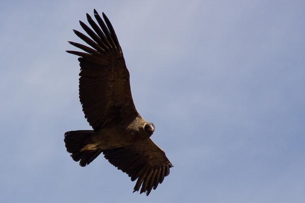 Condor flypast