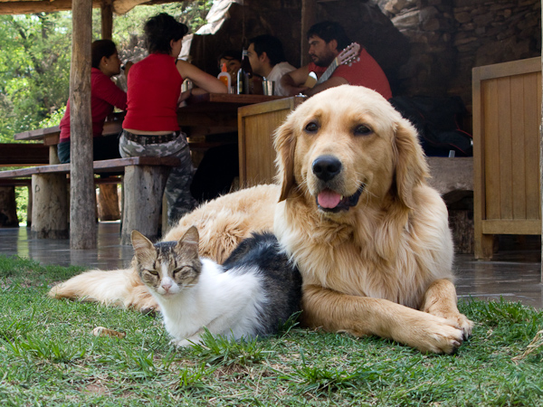 A very friendly dog and cat at the campsite