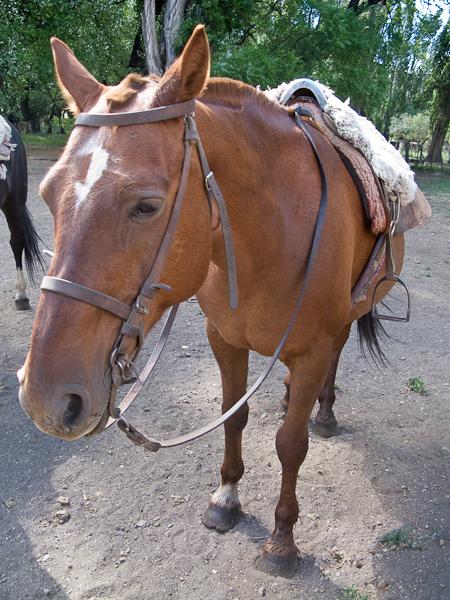 Keryn's horse