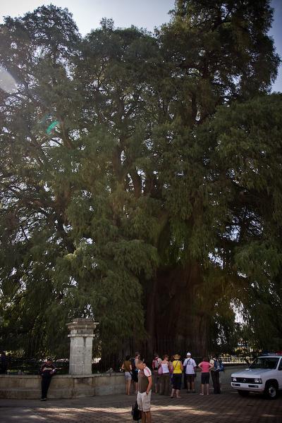 The tree at Santa Maria del Tule