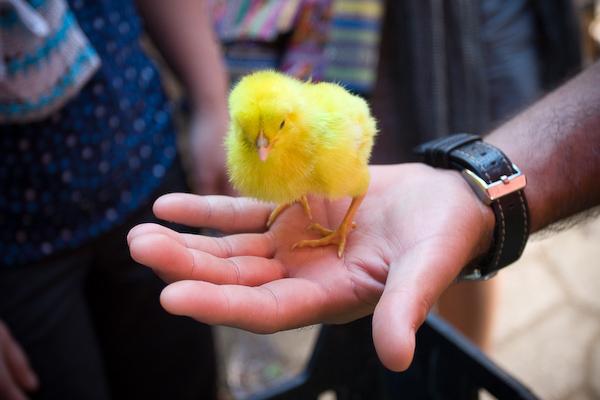 A market chick