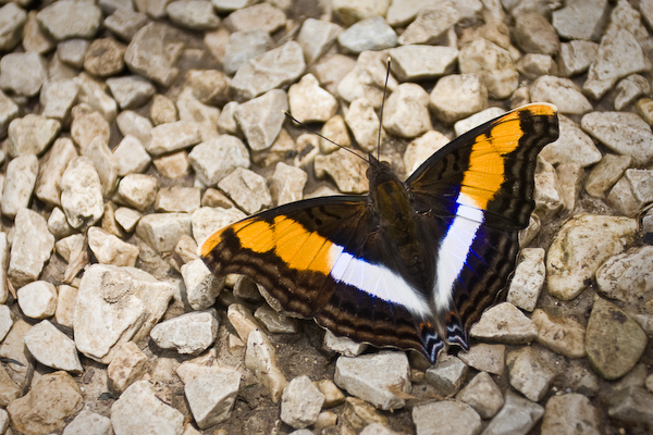A butterfly patiently waiting to be photographed
