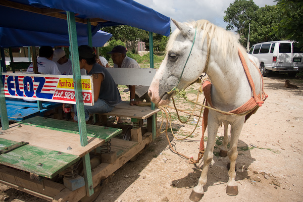 Our horse and one of the buggies