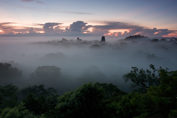 The mist before it rose to obscure the temples of Tikal.